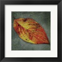 Dogwood Yellow Framed Print