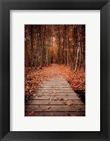 Framed Woodland Path
