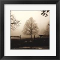 Framed Morning Texture