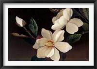 Framed Magnolia Noir