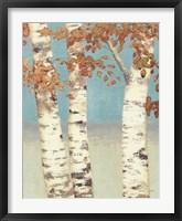 Framed Golden Birches II