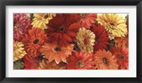Framed Bountiful Gerberas Crop