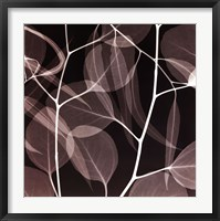 Framed Eucalyptus Leaves [Negative]