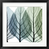 Framed Celosia Leaves I