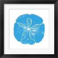 Blue Sand Dollar Framed Print