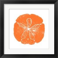 Orange Sand Dollar Framed Print