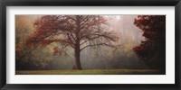 Framed Late Autumn Morning