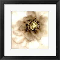Whisper of Dahlia Framed Print