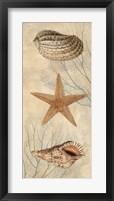 Framed Ocean Companions I