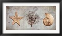 Framed Sea Treasures II