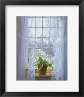 Framed Cape Primrose (small)