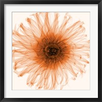 Framed Dahlia (Orange)