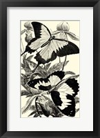 Framed B&W Butterfly III