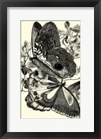 Framed B&W Butterfly IV