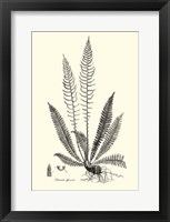 Framed B&W Fern I