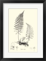 Framed B&W Fern II