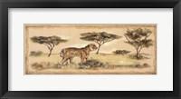 Framed Safari Tiger