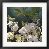 Framed White Roses I