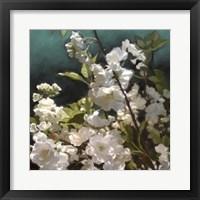 Framed White Roses III