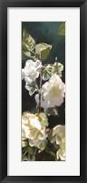 Framed White Roses IV