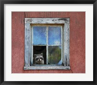 Framed Raccoon Window