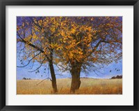 Framed Yellow Elm