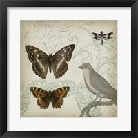Cartouche & Wings III Framed Print