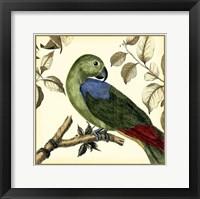 Framed Tropical Parrot III