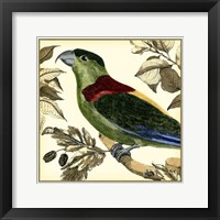 Framed Tropical Parrot IV
