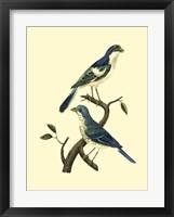 Framed Vintage Bird Pair I