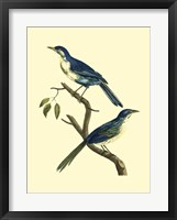 Framed Vintage Bird Pair II