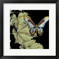 Butterfly on Vine II Framed Print
