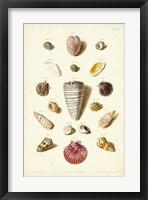 Framed Shells, Tab. III