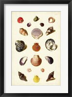 Framed Shells, Tab. XI