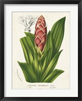 Framed Tropical Bromeliad I