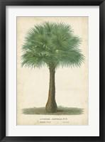 Framed Palm of the Tropics I