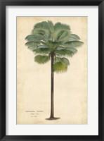 Framed Palm of the Tropics II
