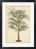 Framed Palm of the Tropics III