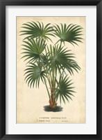 Framed Palm of the Tropics IV