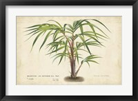 Framed Palm of the Tropics VI
