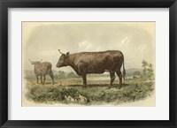 Framed Vache De Devon