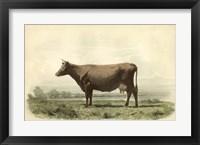 Framed Vache D'Angeln