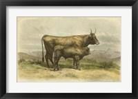 Framed Vache De Salers