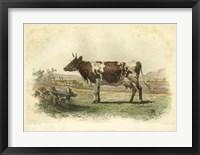 Framed Vache D'Ayr