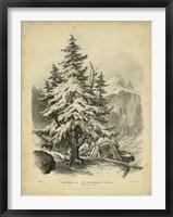 Framed Spruce