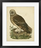 Framed Antique Nozeman Owl I