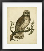 Framed Antique Nozeman Owl II