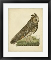 Framed Antique Nozeman Owl III