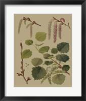 Framed Forest Foliage IV