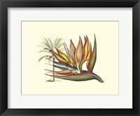 Framed Bird of Paradise I